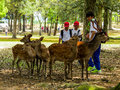 Deers in Nara Park Royalty Free Stock Photo