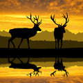 Deers silhouettes in the sunset Stock Photo
