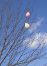 Deflated Tree Balloons, Vertical Royalty Free Stock Photos