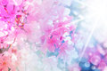 Defocus beautiful pink flowers made with color filters Stock Photo