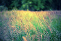Defocus blur beautiful floral background meadow and copy space Stock Image
