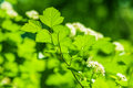 Defocus picture of beautiful closeup spring green leaves and white flowers Stock Images