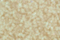 Defocused abstract pale gold lights background glitter christmas Stock Images