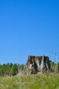 Deforestation concept picture of a tree stump against blue sky due to process Stock Images