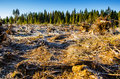 Deforestation disastrous in nordic forest Royalty Free Stock Image