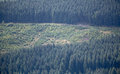 Deforestation forest destruction cut down trees Royalty Free Stock Photography
