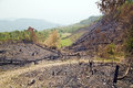Deforestation, after forest fire, natural disaster, Laos Royalty Free Stock Photo