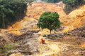 Deforestation logging activity within tropical rainforest Stock Images