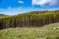 Deforestation in norway bark cut Stock Image