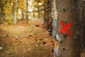 Deforestation painted red cross on a tree that will be cut down Royalty Free Stock Photo