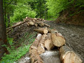 Deforestation in romania baiului mountains may Royalty Free Stock Photography