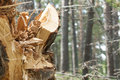 Deforestation splitting wood in the forest Royalty Free Stock Photography