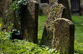 Defused image of headstones in a graveyard with moss and sunlight with background Stock Images
