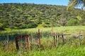 Dehesa grassland by via de la Plata way Spain Royalty Free Stock Photo