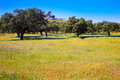 Dehesa grassland by via de la Plata way Spain Royalty Free Stock Photo