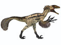 Deinonychus on white is a carnivorous dinosaur from the early cretaceous period Stock Image