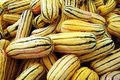 Delicata Squash Stock Photography