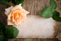 Delicate cream rose on wooden table Royalty Free Stock Image
