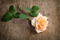 Delicate cream rose on wooden table Stock Photos