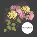 Delicate illustration chrysanthemum flower spring greeting card summer composition Royalty Free Stock Photo