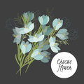 Delicate illustration crocus flower spring greeting card summer composition spring Royalty Free Stock Images