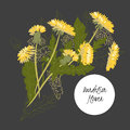 Delicate illustration dandelion flower spring greeting card summer composition spring Royalty Free Stock Photography