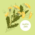 Delicate illustration dandelion flower spring greeting card summer composition spring Royalty Free Stock Photo