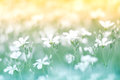 Delicate little white flower on a beautiful background with a gentle tone. Floral background colorful