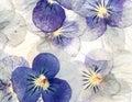 Delicate Pastel Flowers