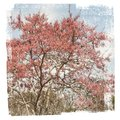 Delicate flowering tree patterns textured close up Royalty Free Stock Photo
