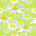 Delicate pattern with white chamomile Stock Photo