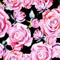 Delicate pink rose. Floral botanical flower.Seamless background pattern. Royalty Free Stock Photo