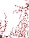 Delicate pink sakura cherry blossoms. EPS 10