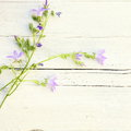 Delicate summer floral background with sprays of dainty little lilac coloured flowers lying on textured white painted wood with Royalty Free Stock Image