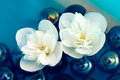 Delicate White Jasmine Flowers on Water Royalty Free Stock Photo