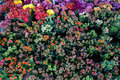 Delicated colorful little spring flowers top view Royalty Free Stock Photo