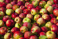 Delicious apples on the grass photos of Royalty Free Stock Photography