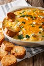 Delicious buffalo chicken dip and crostini macro in a dish. vert Royalty Free Stock Photo