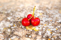 Delicious cherries Royalty Free Stock Photo
