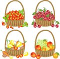 Delicious collection. Four complete baskets with strawberries, cherries, vegetables, fruits. A bountiful harvest. Vector