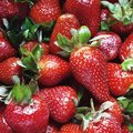 Delicious Fresh Strawberries Royalty Free Stock Photo