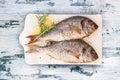Delicious grilled sea bream fish.