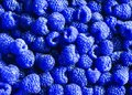 delicious natural background of many ripe unusual blue fr Royalty Free Stock Photo