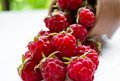 Delicious raspberries from pottery closeup Royalty Free Stock Photo