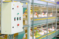 Demonstration of industrial incubator with toy chickens multilevel soft Stock Images