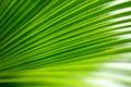 Den gröna leafen gömma i handflatan Arkivfoton