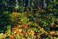 Dense autumn forest abstract view Stock Photo