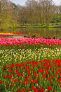 Dense colourful layers of tulip in keukenhof garden europe Stock Photos