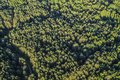 Dense forest aerial of with greenery Royalty Free Stock Image