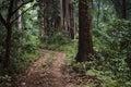 Dense Forest Path